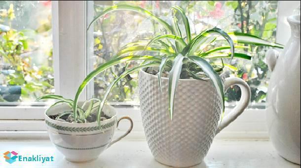 Evinizin Havasını Kimyasallardan Temizleyen 10 çiçek